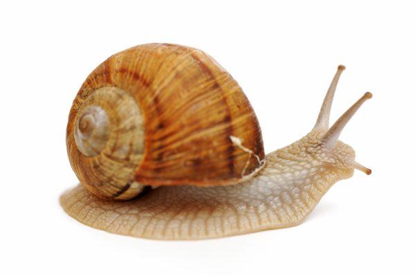 A snail - broadband speeds